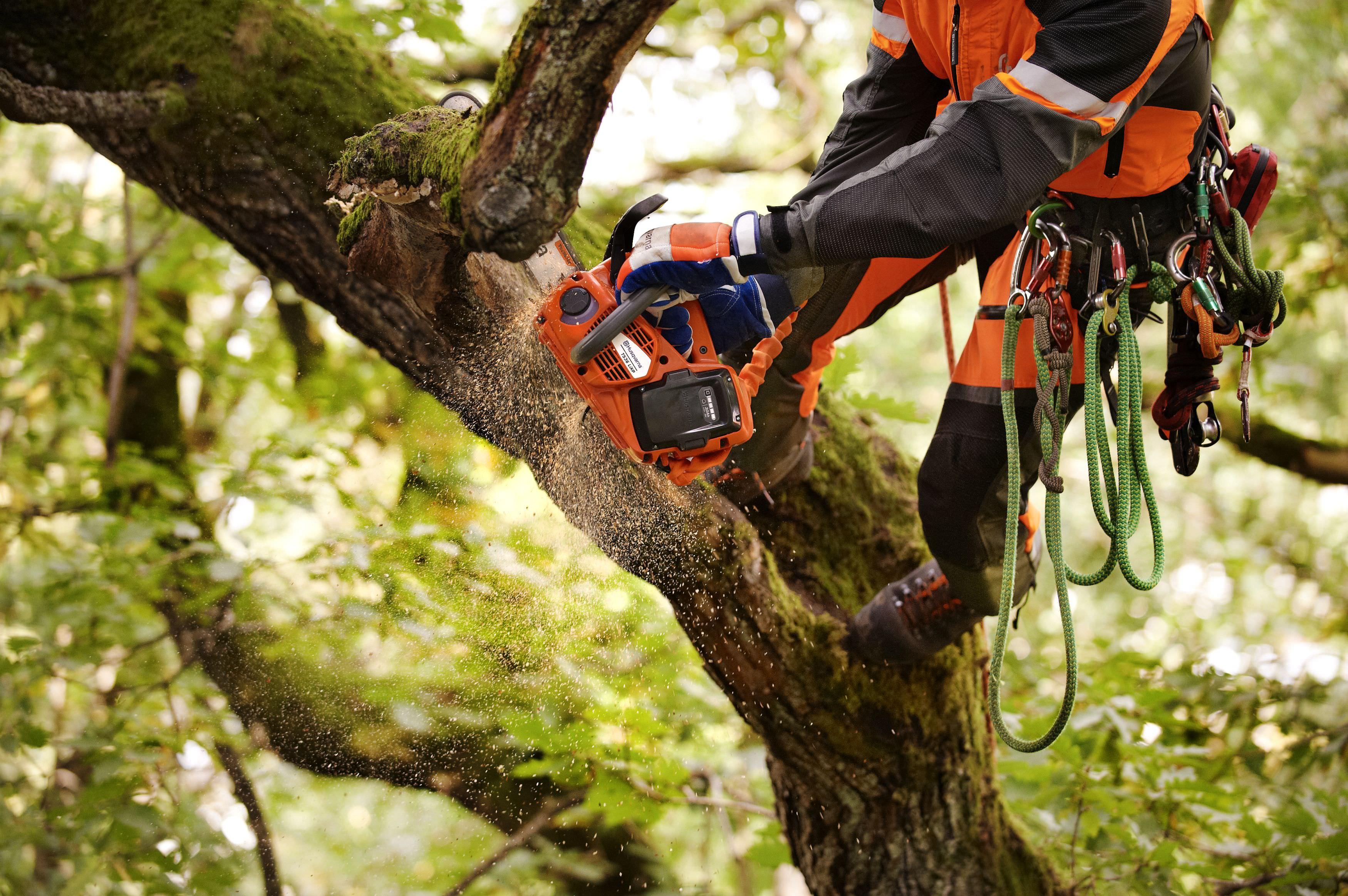 An important announcement regarding Glendale Tree Services
