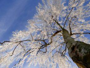Winter tree management