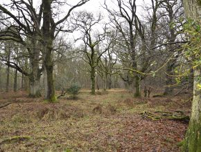 Savernake Forest