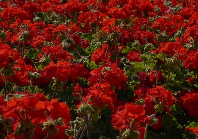 Gatwick planting
