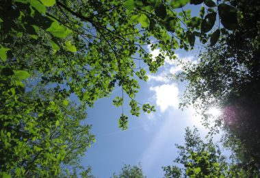 A tree canopy