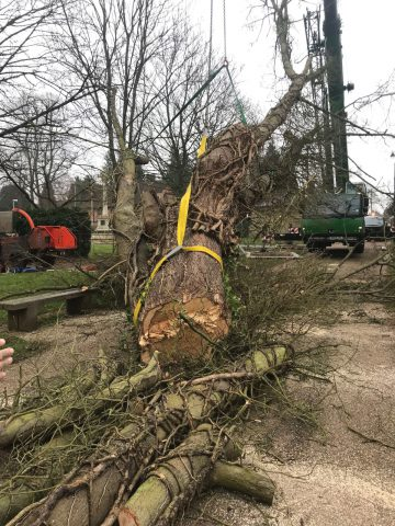 Tree teams tackle storm damage across the UK