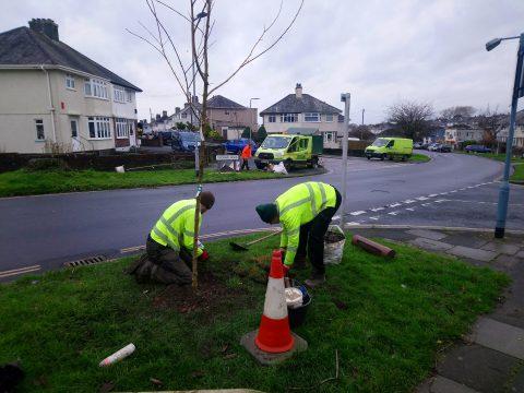 More urban trees for Devon city